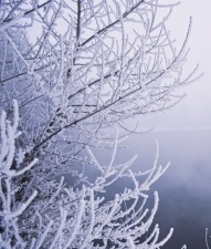 winter_fog_200960 copy
